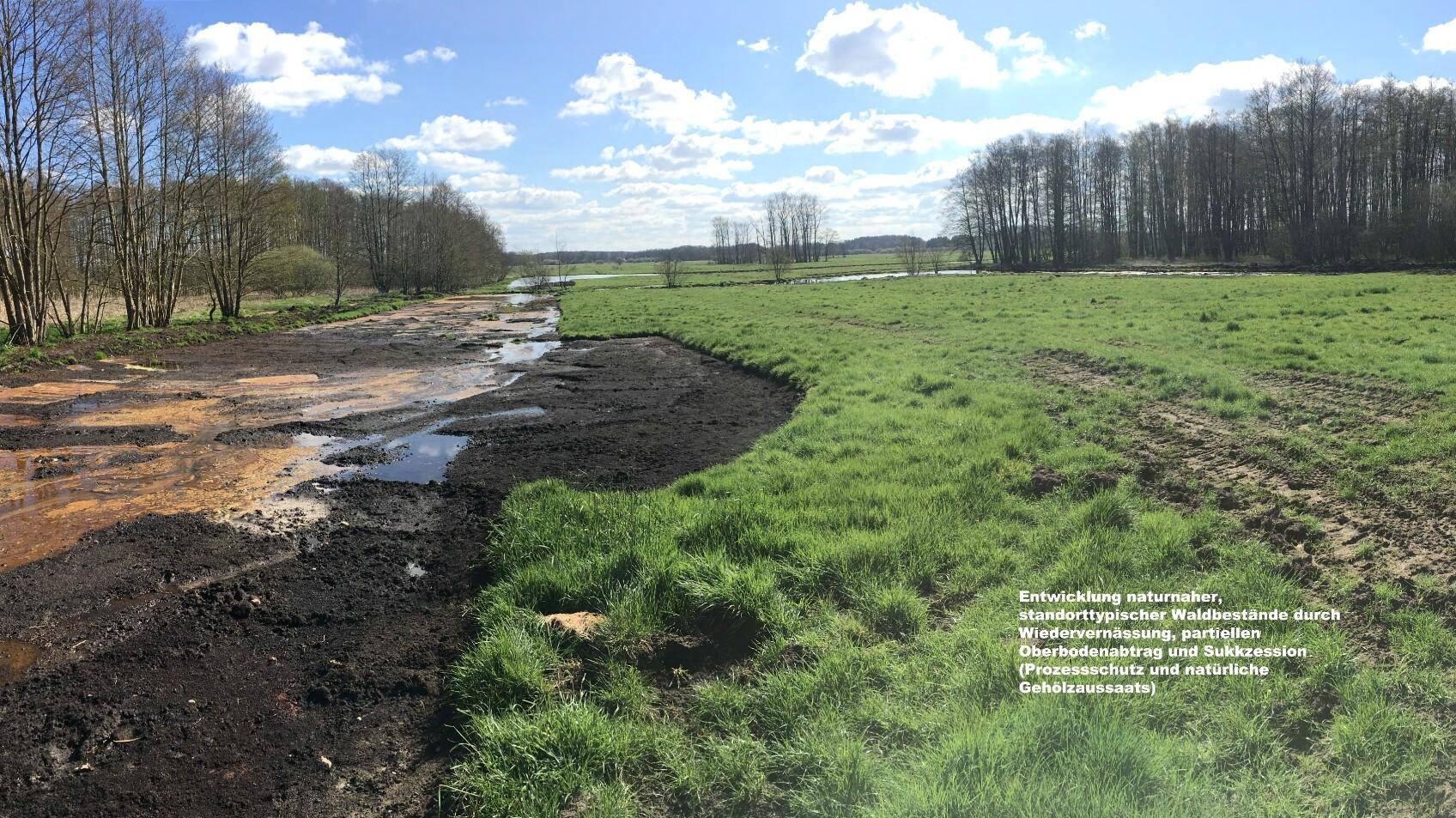 Entwicklung Niedermoorlandschaft Wiepenkathen